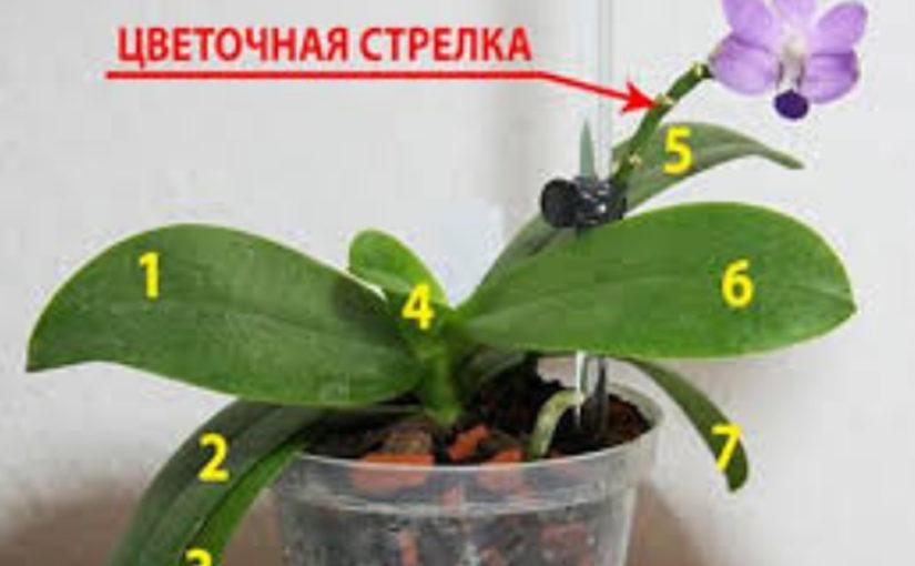 Главные советы в уходе за орхидеями