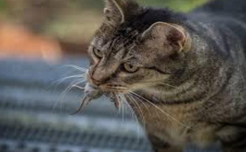15 интересных и малоизвестных историй о кошках