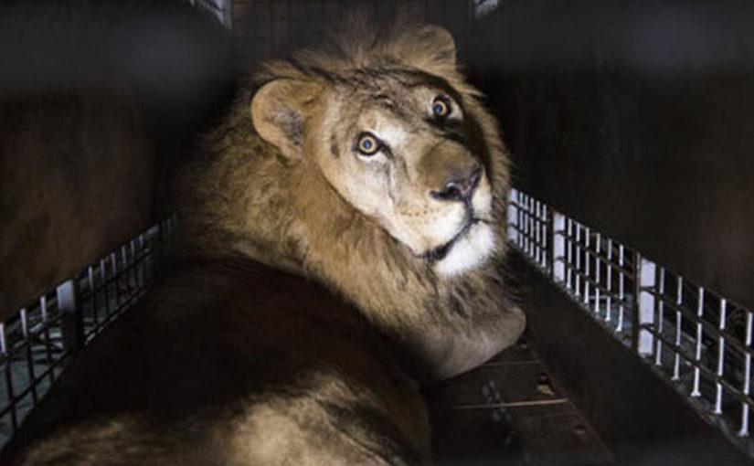 «В Италии принят закон, запрещающий использование животных в цирке «
